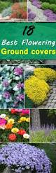 18 best flowering ground cover plants ground cover plants