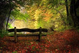 fall pictures of leaves and trees beauty benches cool fall