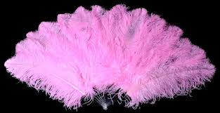 feather fans prime quality ostrich feathers fans