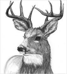 25 free deer drawings u0026 designs free u0026 premium templates