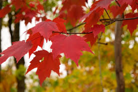 why trees leaves change colors at home