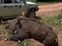 Hog Hunting Memes - imagine this hog chasing you down wtf