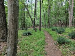 Raleigh Greenway Map Honeycutt Creek Greenway North Carolina Alltrails Com