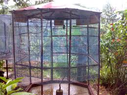 covers for bird cage the best 10 outdoor aviary to backyard pet