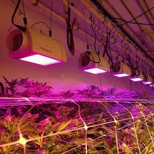 Led Grow Lights Cannabis Setting Your End Goal Total Cost Per Gram Versus Yield The