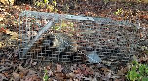 farmer vs the groundhogs practicing resurrection
