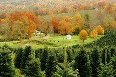 circle tree farms christmas trees in boone nc www