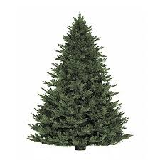christmas tree delivery cut fraser fir christmas tree delivery nyc plantshed