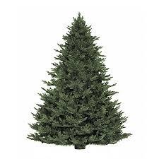 fresh cut fraser fir tree delivery nyc plantshed