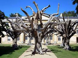 artificial trees the heong gallery at downing college in c flickr