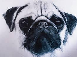 pug sketch pencil drawing art pencil sketch sketch dog