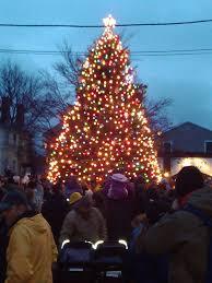 Real Christmas Trees Ipswich Tarr Talk 2012