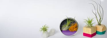 air plants for sale terrariums containers ideas air plant worlds