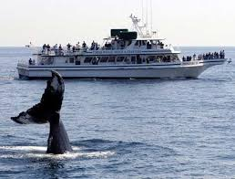 Whale Watches Cape Cod - boston 4 day tour whale watching cape cod plymouth rock