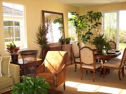 appealing indoor plants house with brown tall plant pot features