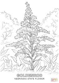 nebraska state flower coloring page free printable coloring pages