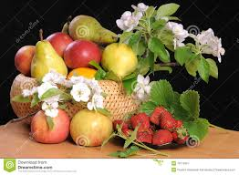 flowers and fruits fruit and flowers stock image image of flowering sheet 19715931