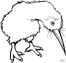 kiwi coloring pages free coloring pages