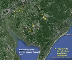 Rutgers Map Veg Ipm Update Week Ending 8 13 14 U2014 Plant U0026 Pest Advisory