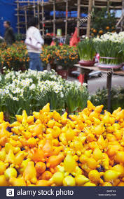 New Years Decorations Sale by Traditional Plant Decorations And Daffodils For Sale At Flower