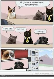 Scared Cat Meme - scared cats lolbrarycompost37617 alright team we need ideas for