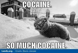 Hate Snow Meme - best of haters meme 80 skiparty wallpaper
