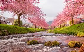 garden design with beautiful landscape material waterfalls