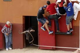 pacma anuncia acciones legales contra el toro enmaromado de benavente