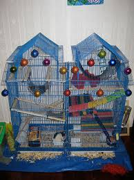 Best Bedding For Rats How To Make A House For Your Pet Rat Hubpages