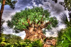 tree of life tree of life wallpapers u2013 atdisneyagain