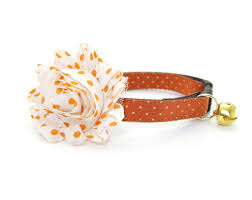 fall cat collar pumpkin spice burnt orange gold dots