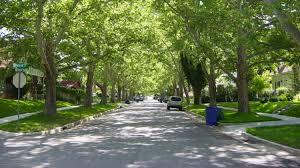 leafy streets and tree filled backyards can add up to 20 000 to