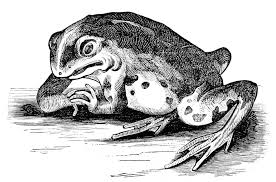 file psm v01 d365 frog with mutilated pons varolii jpg wikimedia