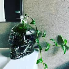 succulents popsugar home