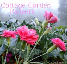 cottage garden flowers cottage garden discoveries