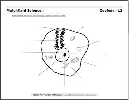 animal cell worksheets u2013 wallpapercraft