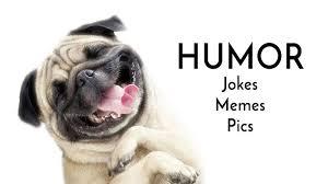 humor u2014 pug jokes