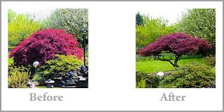 ornamental tree trimming and sculpting service floral creations