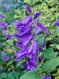 10 types of perennial wildflowers hgtv
