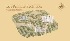 5 03 primate evolution by jasmyne mehrten on prezi