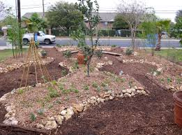 austin native plants edible estates 5 austin tx the garden