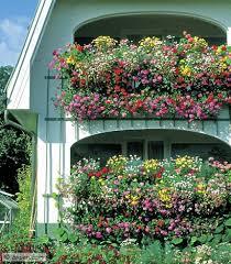 balkon und terrassenpflanzen blütenmeer balkon und terrassenpflanzen terrasse garten und