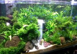 membuat aquascape bening aquascape termahal cara membuat air aquascape aquarium bening hobi