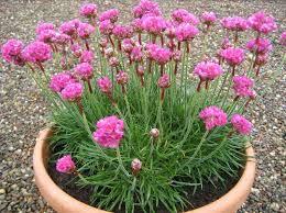 sunlight l for plants growing alpine plants
