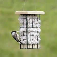 Backyard Wild Birds by 299 Best Backyard Birds Images On Pinterest Backyard Birds For