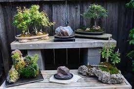 modesto bonsai enthusiasts set to showcase their artform the