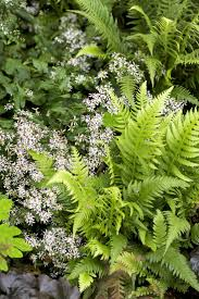 17 best images about gardens plants on pinterest gardens white