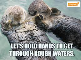 Otter Meme - rape culture taking over your timeline these supportive otter