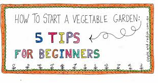 how to start a vegetable garden for beginners how to start a vegetable garden 5 gardening tips for beginners