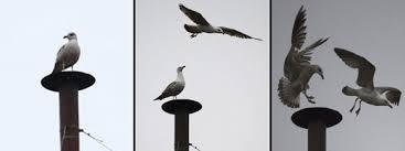 tarocchi gabbiano papa francesco libera due colombe un corvo e un gabbiano